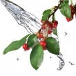 Red cherry with leaves and water splash — Stock Photo