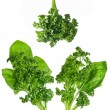 Spinach and parsley — Stockfoto