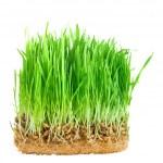 szczegół trawa zielony — Zdjęcie stockowe