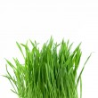 Close-up green grass — Stock Photo