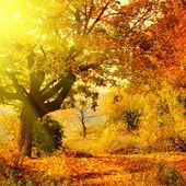 Podzimní les s sluneční paprsek — Stock fotografie