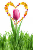 Purple tulip and green grass — Stock Photo