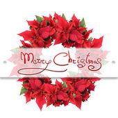 Christmas wreath from poinsettia — Stockfoto