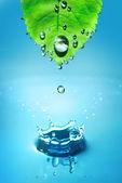 Foglia e acqua spruzzata — Foto Stock