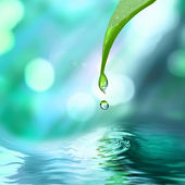 Green leaf with water drop — Stock Photo