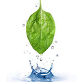 Spinach leaf with water — Stock Photo