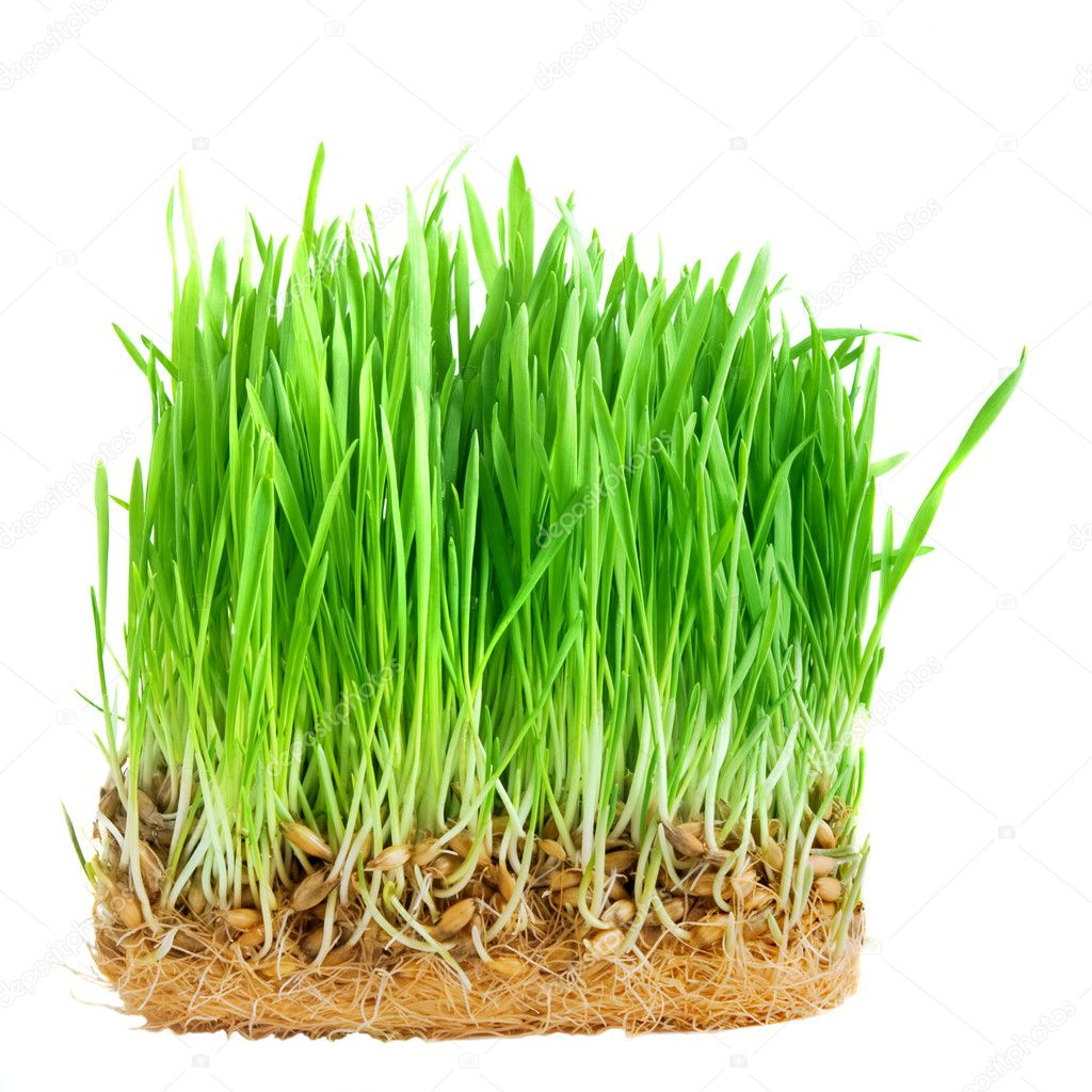 Close-up green grass isolated on white — Stock Photo #1365993