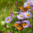 Stock Photo: Butterfly on flowers