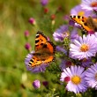 Butterfly on flowers — Stock Photo #1370822