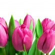 Close-up pink tulips — Stock Photo