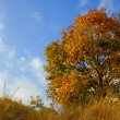 Autumn tree and sky — Stock Photo #1387285