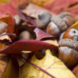 Royalty-Free Stock Photo: Acorns with autumn leaves