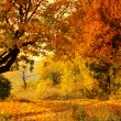 Autumn Forest - Foto Stock