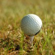 Royalty-Free Stock Photo: Golf ball in grass