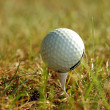 Golf ball in grass — Stock Photo #1389965