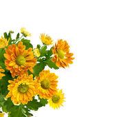 Yellow chrysanthemum bouquet — Stock Photo