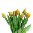 Close-up yellow tulips isolated on whit — Stock Photo
