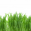 图库照片: Close-up green grass isolated on white