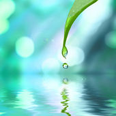 Goccia di acqua e foglia — Foto Stock