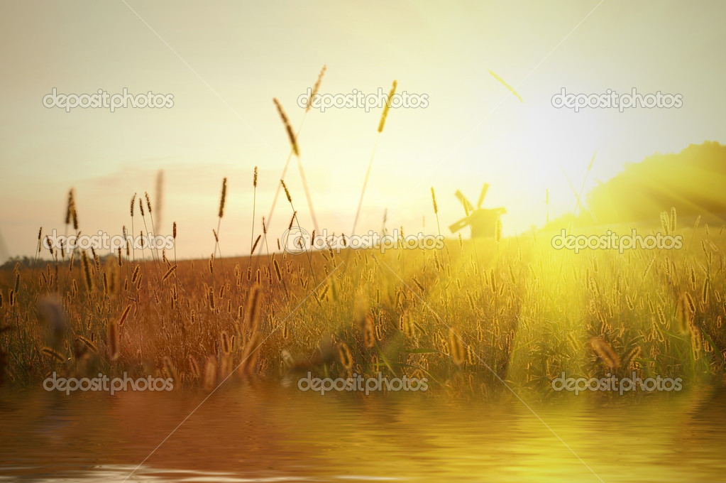 Field on sunset with water reflection — Stok fotoğraf #2621356