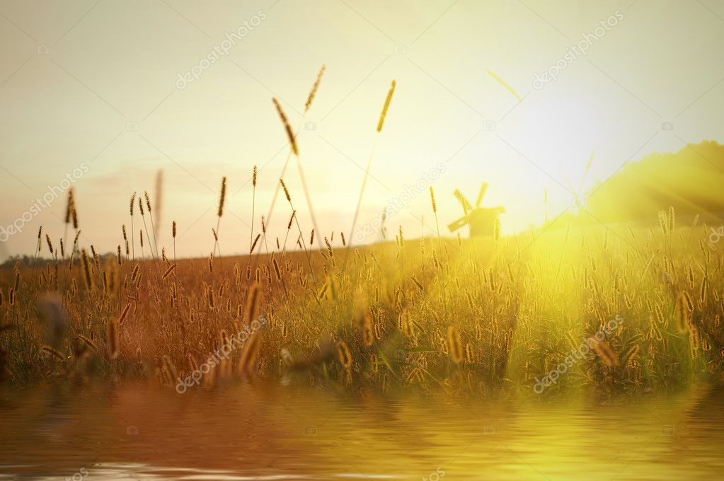 Field on sunset with water reflection — Stockfoto #2621356