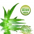 Green aloe vera with icon - Stock Photo