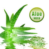 Green aloe vera with icon — Stock Photo
