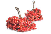 Berries of red Viburnum — 图库照片