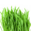 Stock Photo: Close-up green grass isolated on white