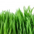 Close-up green grass isolated on white — ストック写真 #2643283