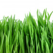 Close-up green grass isolated on white - Stock Photo