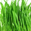 Close-up groen gras — Stockfoto