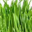 Close-up groen gras geïsoleerd op wit — Stockfoto