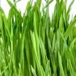 szczegół trawa zielony na białym tle — Zdjęcie stockowe