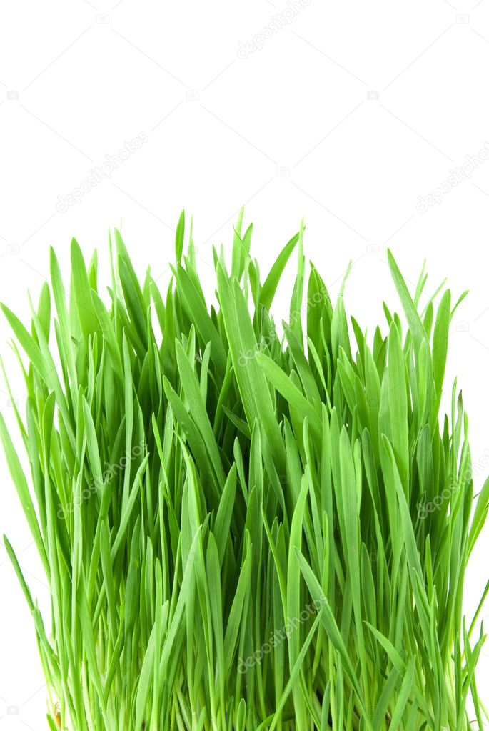 Close-up green grass isolated on white — Stockfoto #2643241