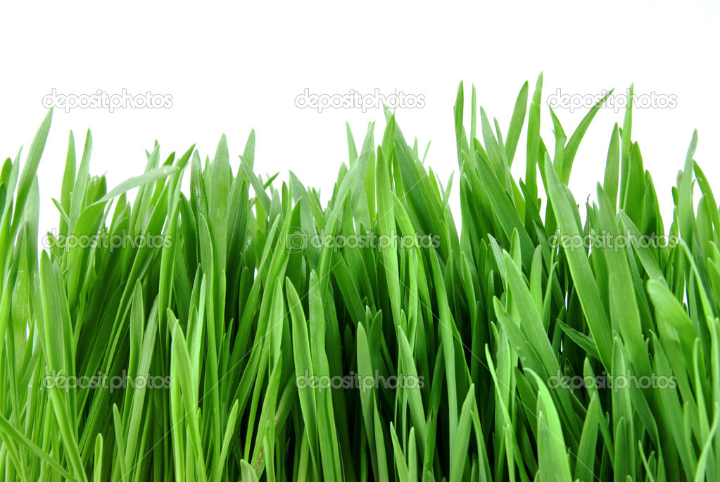 Close-up green grass isolated on white  Stock Photo #2643283