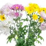 Chrysanthemum bouquet isolated on white — Stock Photo