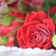 Red rose bouquet — Stockfoto