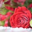 Red rose bouquet — Stok fotoğraf