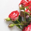 Red rose bouquet — Stock Photo