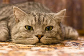 Cat on the carpet — Stock Photo