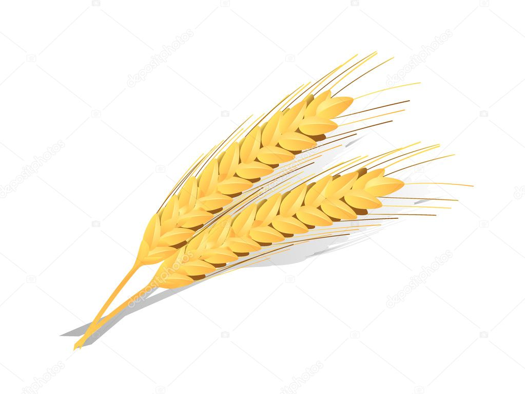 Ears of wheat detailed vector icon — Stock Vector #1926687