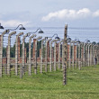 Wire fence and stoves in Birkenau — Stock Photo