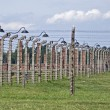 Royalty-Free Stock Photo: Wire fence and stoves in Birkenau