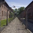 Wire fence in Auschwitz camp — Stock Photo