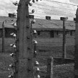 Wire fence in Auschwitz - Birkenau — Stock Photo