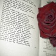 Royalty-Free Stock Photo: Red Roses on the book