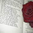 Red Roses on the book - Stockfoto