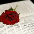 图库照片: Red Rose on the book