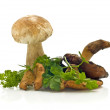 Group of mushrooms and green parsley — Stock Photo